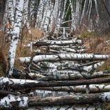 River with birch Stock Photos