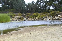River birds Carpinteria California Stock Images