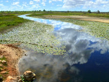 The River blooming algae. Africa, Mozambique. Stock Photography