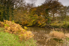 River Blyth flows through Plessey Woods Stock Photos