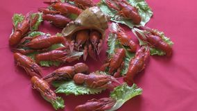 River boiled crayfish. A good snack to beer stock footage