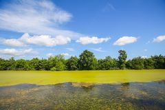 River Bosut in Vinkovci. A view of the green river Bosut covered with algal blooms in Vinkovci, Croatia Royalty Free Stock Photos