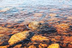 River Bottom Royalty Free Stock Photo