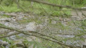 River through the branches of trees. Forest river and trees in autumn.  stock footage
