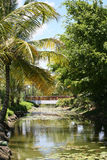 A river and bridge in the Bahamas. A river in the Bahamas with a bridge and water lilies Royalty Free Stock Images