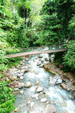 A River and a Bridge in Rainforest royalty free stock image