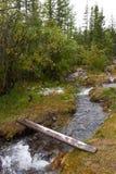River, bridge and woods. Stock Image