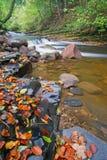 River brock Stock Photography