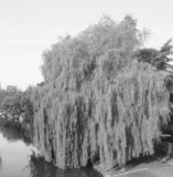 River Cam in Cambridge in black and white. View of River Cam in Cambridge, UK in black and white royalty free stock photo