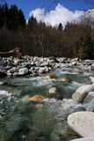 A river in Canada. Woth large trees royalty free stock images