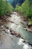 River in carpathian Stock Image