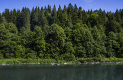 River at the Carpathian forest Royalty Free Stock Image