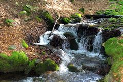 River in Carpathian mountains Royalty Free Stock Photography