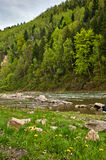 River in Carpathians mountains in spring Royalty Free Stock Images