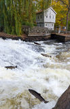 River cascade with jumping sea trouts Royalty Free Stock Images