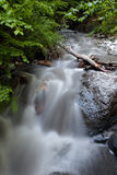 River with cascades in a forest Stock Image
