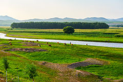 The river and cattle sunset. The photo was taken in 203 provincial road Hinggan League, Inner Mongolia Autonomous,China Royalty Free Stock Photography