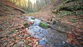 River in Caucasus mountains forest, near lake. River in Caucasus mountains forest near lake Ritsa, Abkhazia, Georgia stock footage