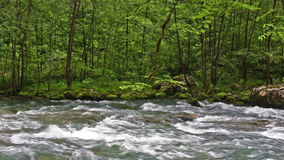 River in Caucasus mountains forest, near lake stock video footage