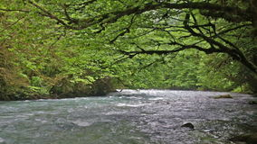 River in Caucasus mountains forest, near lake stock footage