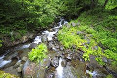 River in Caucasus mountains, near lake Ritsa, Abkhazia, Georgia Stock Photography
