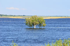 River Chobe,Botswana. Royalty Free Stock Photo