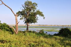 River Chobe Stock Photos