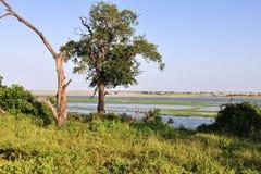 River Chobe. Landscape near river Chobe in national park Chobe in Botswana stock photos
