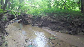 River in city park. In city park river on background trees stock footage