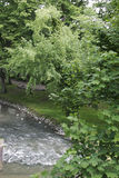 A river in a city park in Maastricht, The Netherlands Stock Photography
