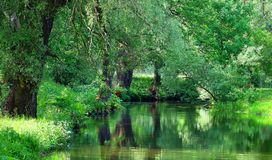 River in the city park Royalty Free Stock Image