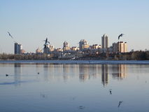 River, city and seagulls Royalty Free Stock Photography