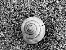 River cockleshell on sand in black and white Royalty Free Stock Photo