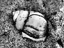 River cockleshell on sand in black and white Royalty Free Stock Images