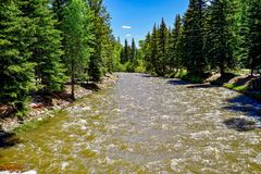 River in Colorado. Surrounded by mountains and trees with rushing water flowing by and blue skies Royalty Free Stock Photo