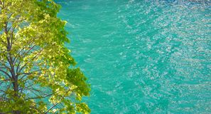 River. Colorful and cheerful view of water and a tree on a sunny day -- for a background Royalty Free Stock Photos