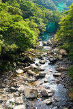 The river come from forest Stock Photography