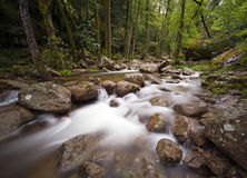 River in Corsica Stock Photography