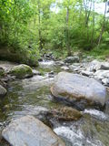 River corsican in a forest Stock Photo