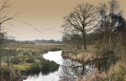 River in countryside Royalty Free Stock Photos