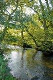 River in countryside Stock Photos