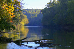 River covered with mist in early morning  with autumn trees on the bank Royalty Free Stock Image