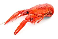 River crab Stock Image