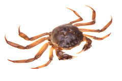 River crabs Royalty Free Stock Images