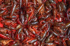 River crayfish on the counter of the Chinese market. Prepared according to national recipe. royalty free stock photo