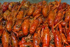 River crayfish on the counter of the Chinese market. royalty free stock photos