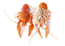 River crayfish royalty free stock photos