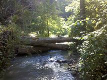 River. Creek river logs tree over water stock image