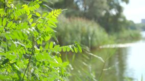 River creek on a summer day stock video footage
