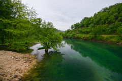 The river of Crnojevic near the coast of Skadar lake. The river of Crnojevic near the coast of Skadar lake with green waters, boats and plants on its bank Stock Images